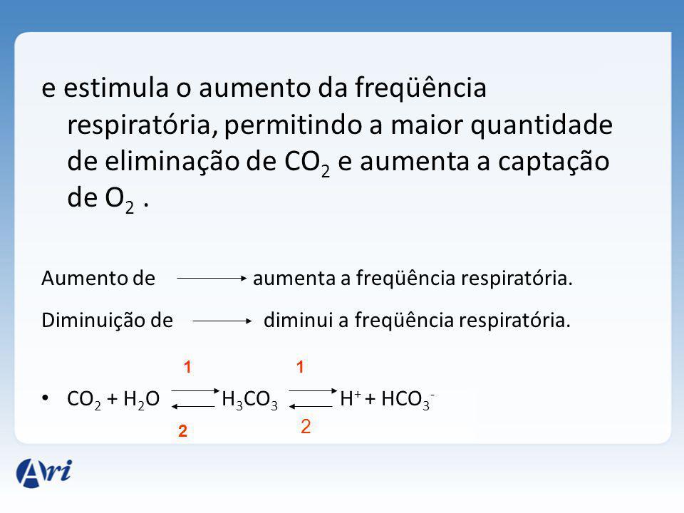 e estimula o aumento da freqüência respiratória, permitindo a maior quantidade de eliminação de CO 2 e aumenta a captação de O 2.