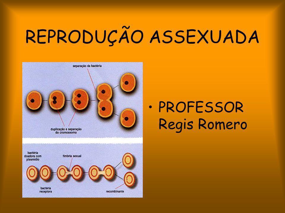 REPRODUÇÃO ASSEXUADA PROFESSOR Regis Romero