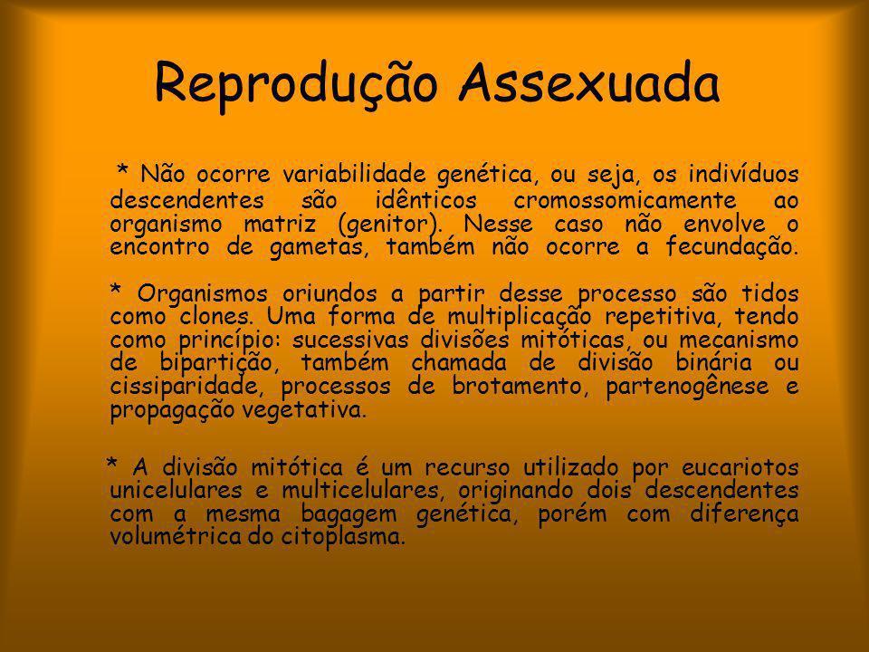 Reprodução Assexuada * Não ocorre variabilidade genética, ou seja, os indivíduos descendentes são idênticos cromossomicamente ao organismo matriz (genitor).