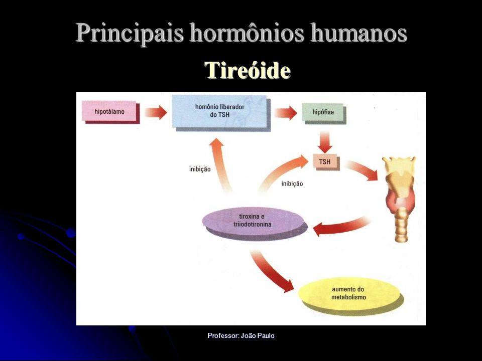 Professor: João Paulo Principais hormônios humanos Tireóide