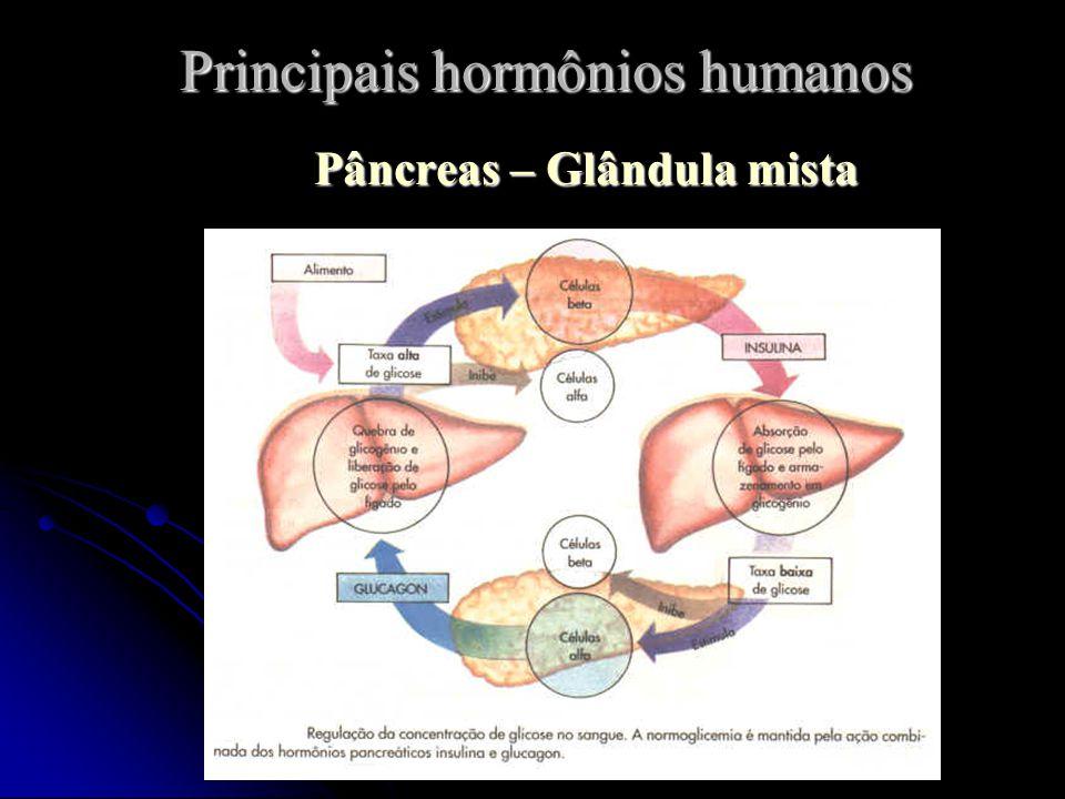 Professor: João Paulo Principais hormônios humanos Pâncreas – Glândula mista