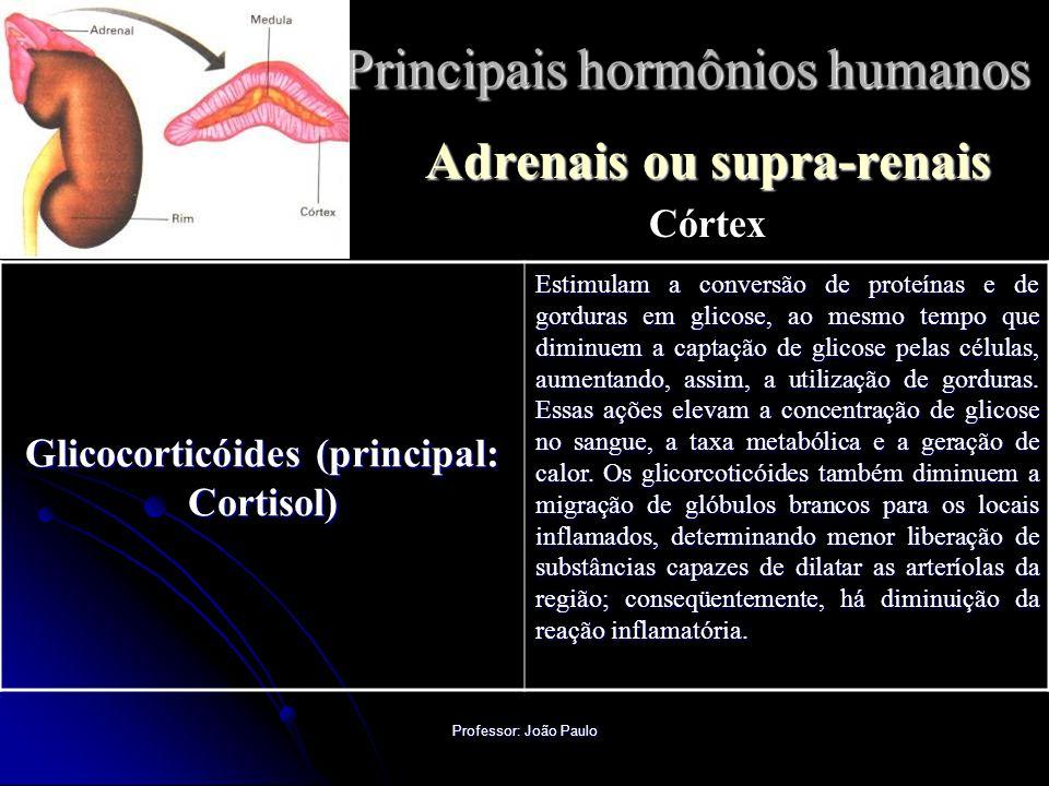 Professor: João Paulo Principais hormônios humanos Adrenais ou supra-renais Córtex Glicocorticóides (principal: Cortisol) Estimulam a conversão de proteínas e de gorduras em glicose, ao mesmo tempo que diminuem a captação de glicose pelas células, aumentando, assim, a utilização de gorduras.