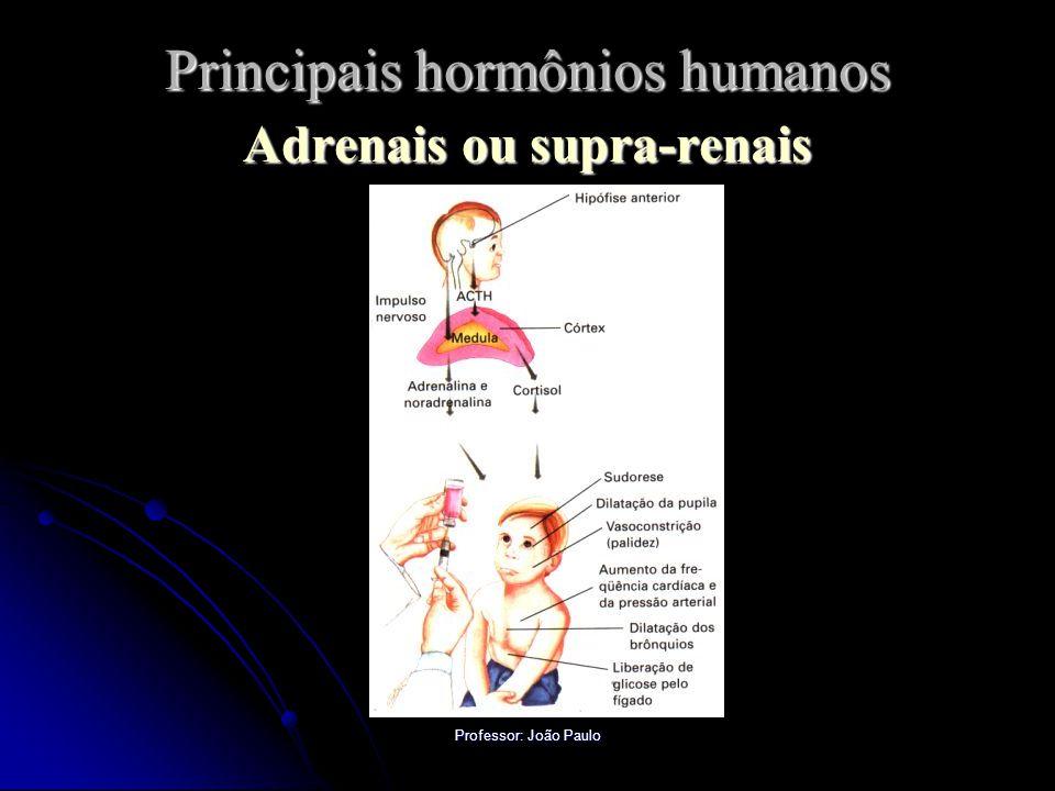 Professor: João Paulo Principais hormônios humanos Adrenais ou supra-renais