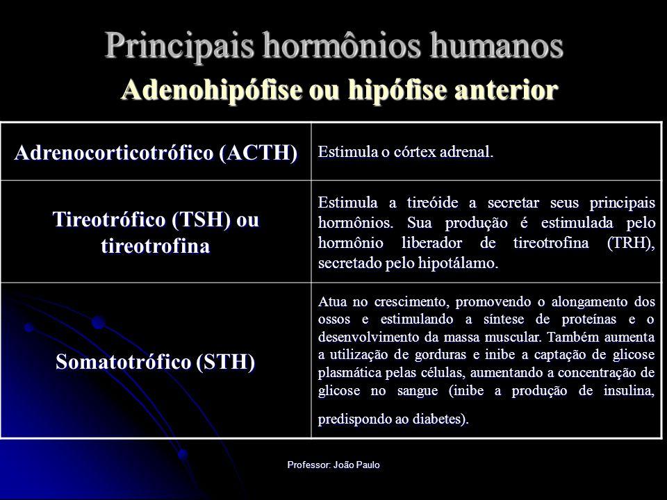 Professor: João Paulo Principais hormônios humanos Adenohipófise ou hipófise anterior Adrenocorticotrófico (ACTH) Estimula o córtex adrenal.