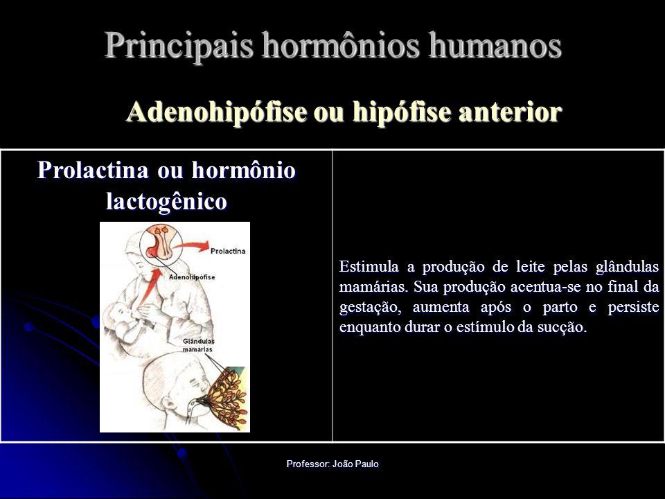Professor: João Paulo Principais hormônios humanos Adenohipófise ou hipófise anterior Prolactina ou hormônio lactogênico Estimula a produção de leite pelas glândulas mamárias.