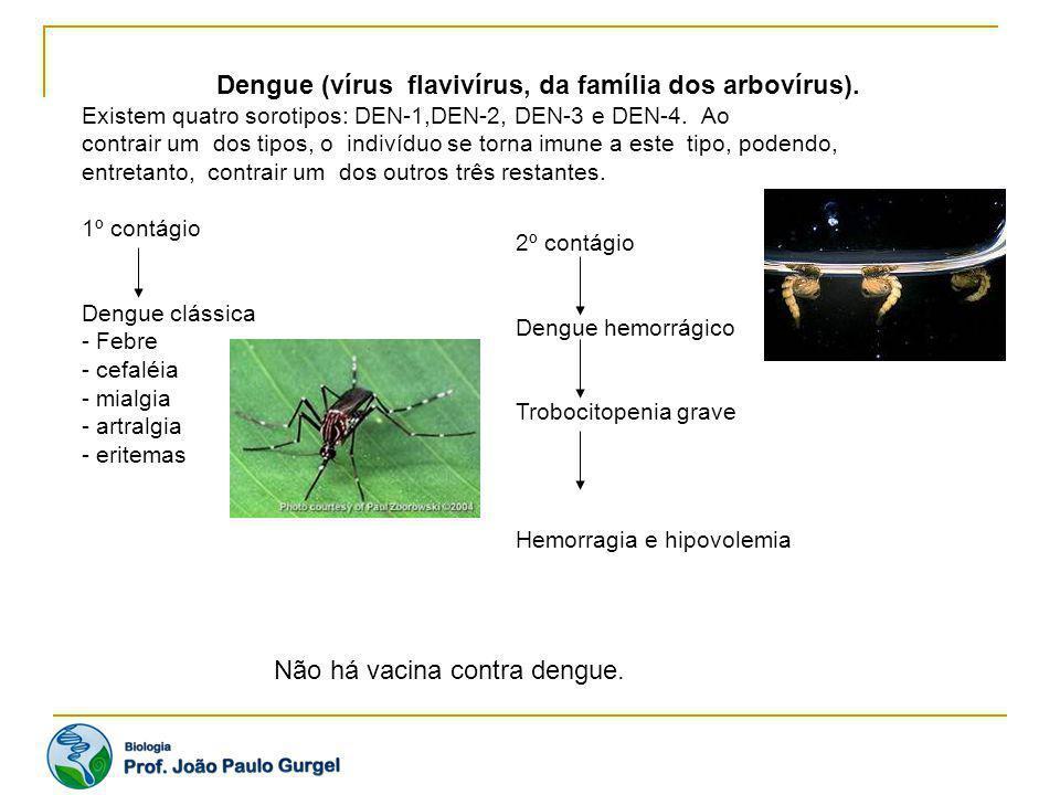 Dengue (vírus flavivírus, da família dos arbovírus). Existem quatro sorotipos: DEN-1,DEN-2, DEN-3 e DEN-4. Ao contrair um dos tipos, o indivíduo se to