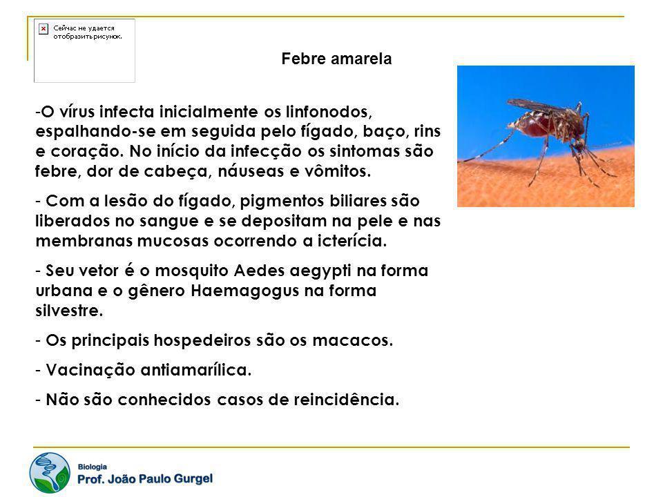 Febre amarela - O vírus infecta inicialmente os linfonodos, espalhando-se em seguida pelo fígado, baço, rins e coração. No início da infecção os sinto