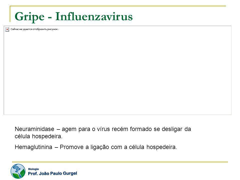 Gripe - Influenzavirus Neuraminidase – agem para o vírus recém formado se desligar da célula hospedeira. Hemaglutinina – Promove a ligação com a célul