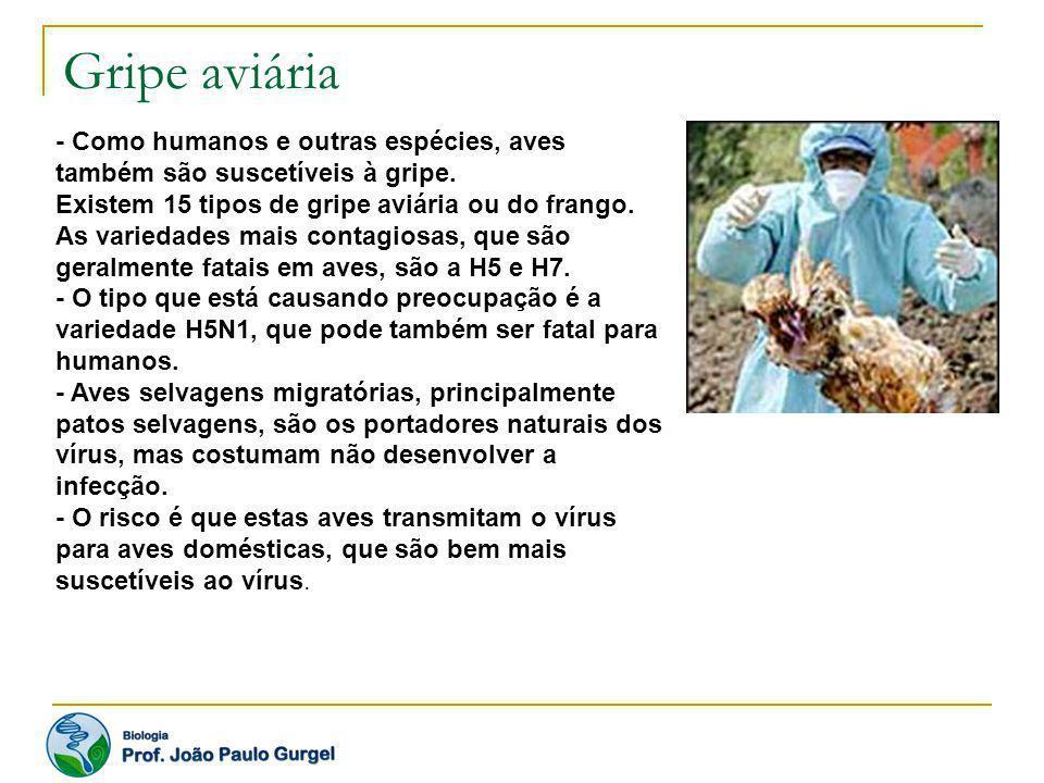 Gripe aviária - Como humanos e outras espécies, aves também são suscetíveis à gripe. Existem 15 tipos de gripe aviária ou do frango. As variedades mai