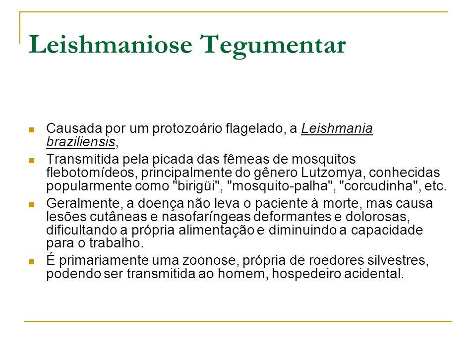 Leishmaniose Tegumentar Causada por um protozoário flagelado, a Leishmania braziliensis, Transmitida pela picada das fêmeas de mosquitos flebotomídeos