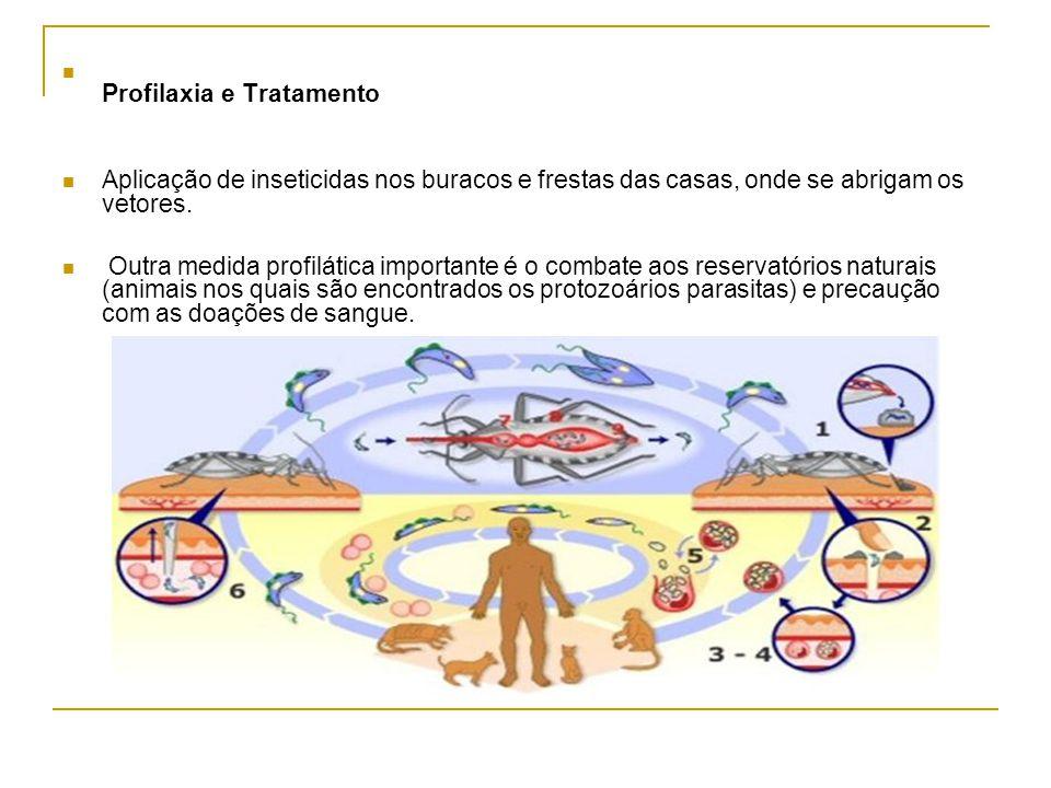 Profilaxia e Tratamento Aplicação de inseticidas nos buracos e frestas das casas, onde se abrigam os vetores. Outra medida profilática importante é o