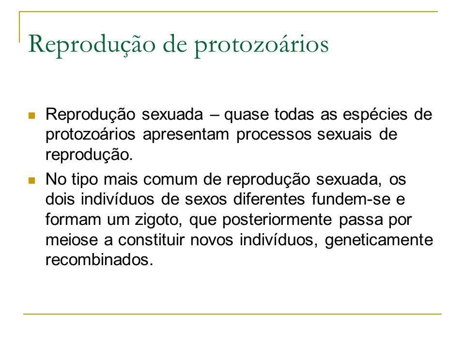 Reprodução de protozoários Reprodução sexuada – quase todas as espécies de protozoários apresentam processos sexuais de reprodução. No tipo mais comum