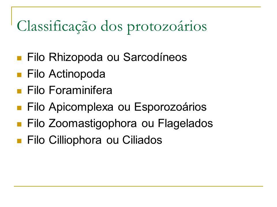 Classificação dos protozoários Filo Rhizopoda ou Sarcodíneos Filo Actinopoda Filo Foraminifera Filo Apicomplexa ou Esporozoários Filo Zoomastigophora