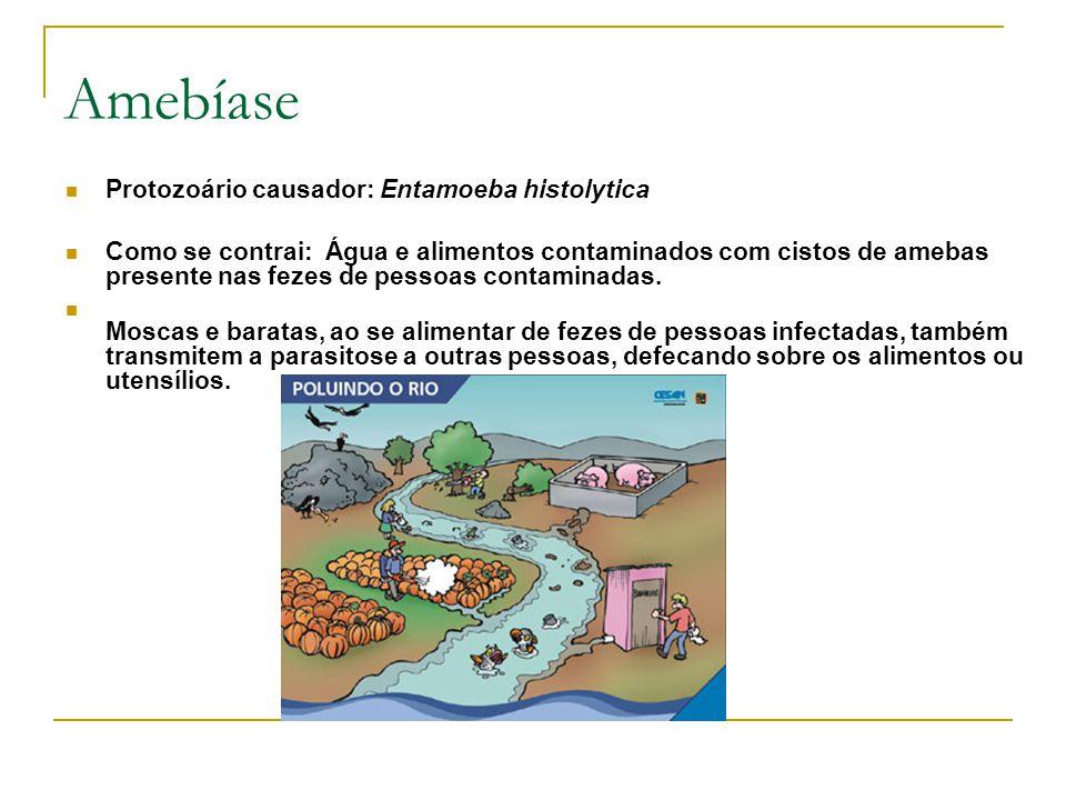 Amebíase Protozoário causador: Entamoeba histolytica Como se contrai: Água e alimentos contaminados com cistos de amebas presente nas fezes de pessoas