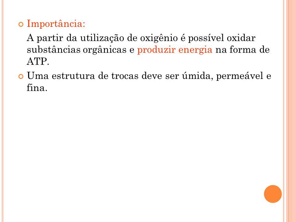 T IPO DE ESTRUTURAS DE TROCAS : Superfície corpórea: O 2 entra a partir da epiderme e se difunde para as demais células.
