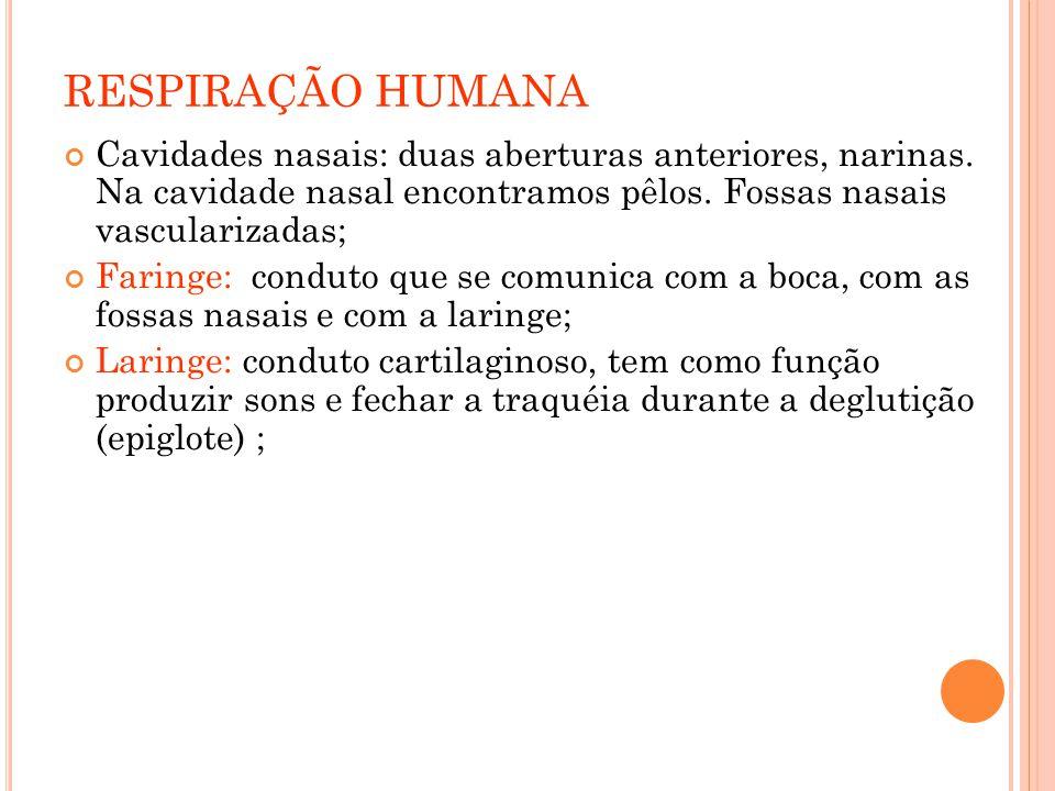 RESPIRAÇÃO HUMANA Cavidades nasais: duas aberturas anteriores, narinas.