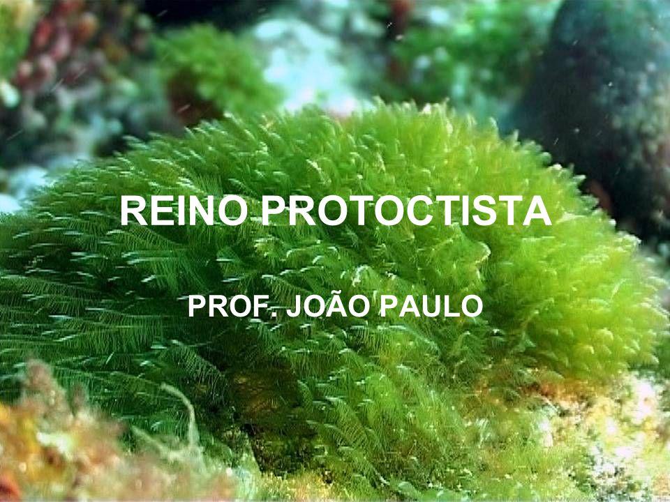 REINO PROTOCTISTA PROF. JOÃO PAULO