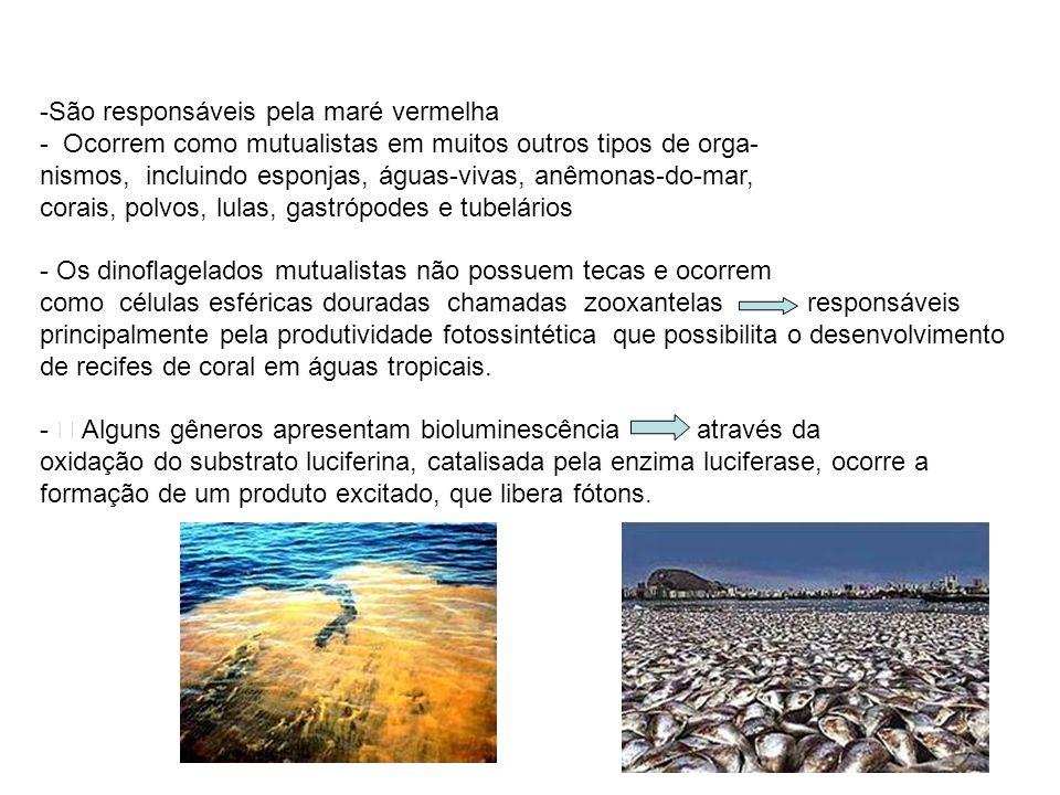 -São responsáveis pela maré vermelha - Ocorrem como mutualistas em muitos outros tipos de orga- nismos, incluindo esponjas, águas-vivas, anêmonas-do-m