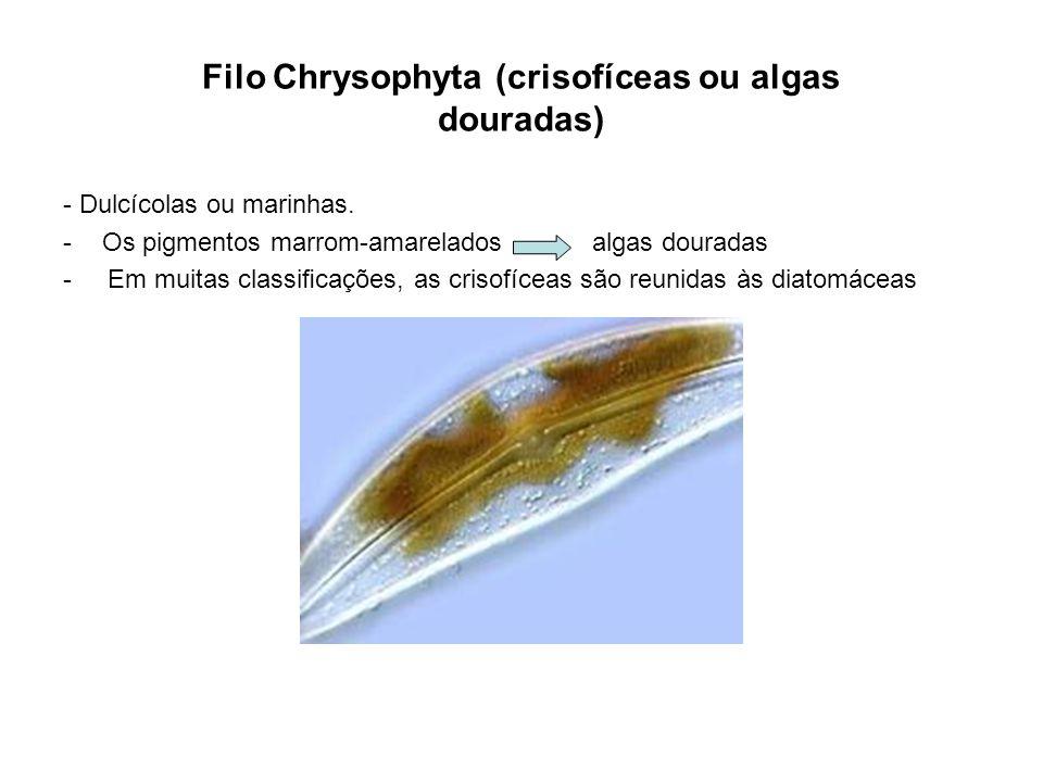 Filo Chrysophyta (crisofíceas ou algas douradas) - Dulcícolas ou marinhas. -Os pigmentos marrom-amarelados algas douradas - Em muitas classicações, as