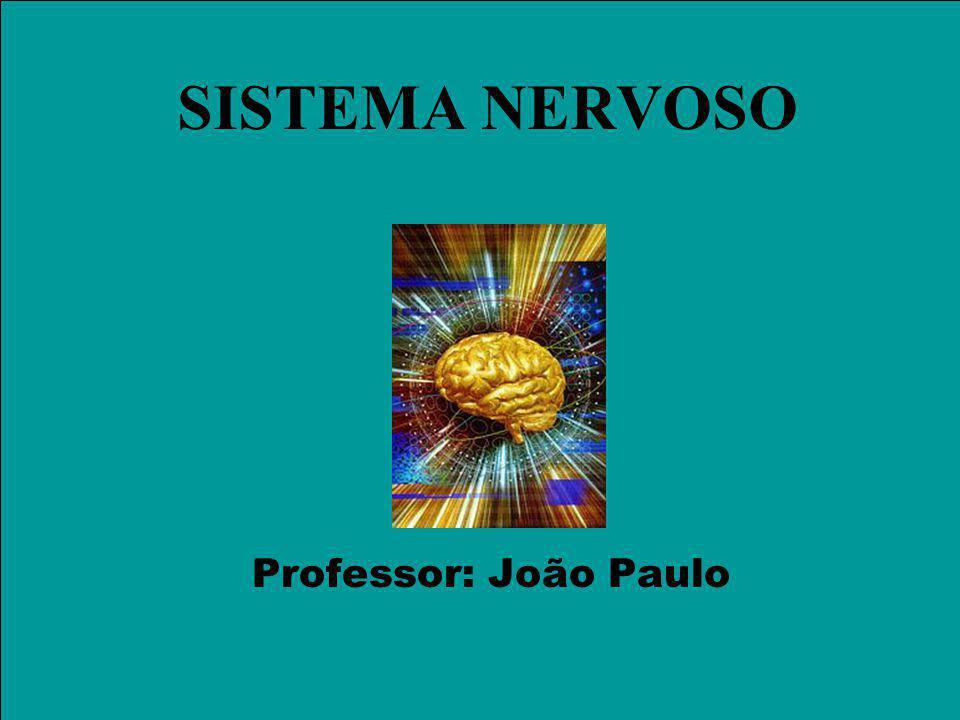SISTEMA NERVOSO Professor: João Paulo
