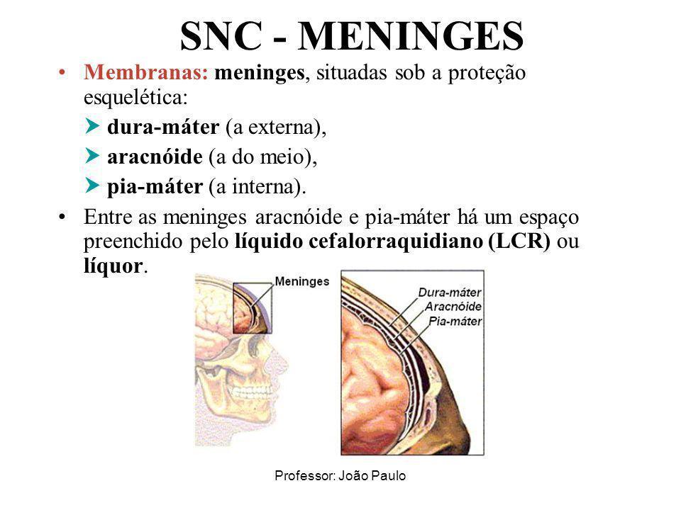 Professor: João Paulo SNC - MENINGES Membranas: meninges, situadas sob a proteção esquelética: dura-máter (a externa), aracnóide (a do meio), pia-máte