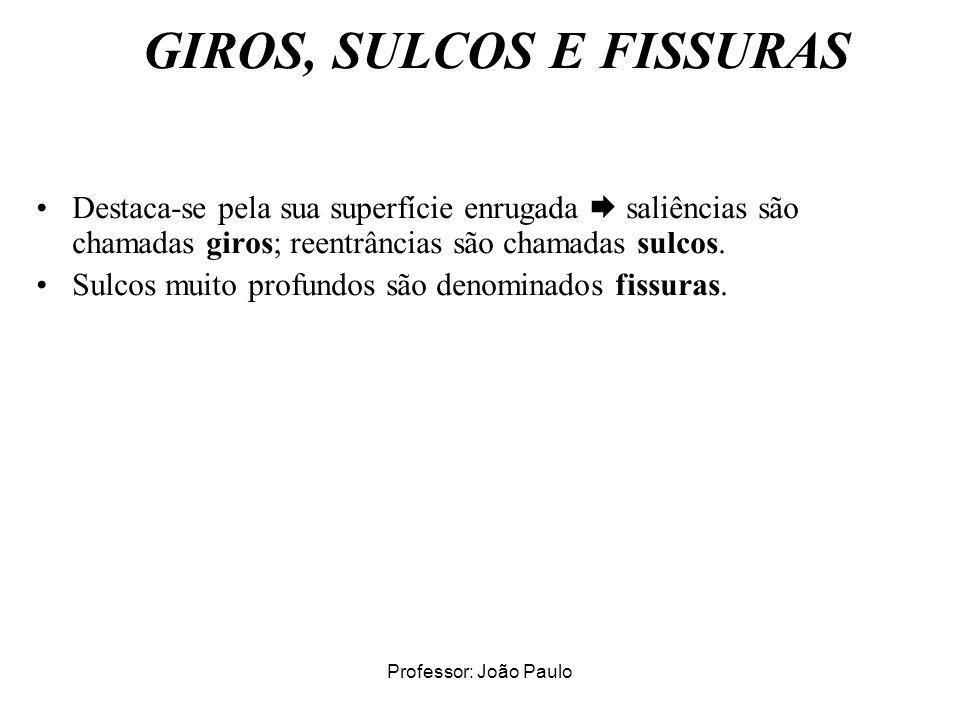 Professor: João Paulo GIROS, SULCOS E FISSURAS Destaca-se pela sua superfície enrugada saliências são chamadas giros; reentrâncias são chamadas sulcos