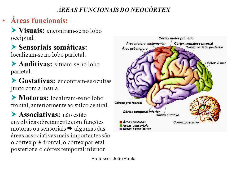 Professor: João Paulo ÁREAS FUNCIONAIS DO NEOCÓRTEX Áreas funcionais: Visuais: encontram-se no lobo occipital. Sensoriais somáticas: localizam-se no l