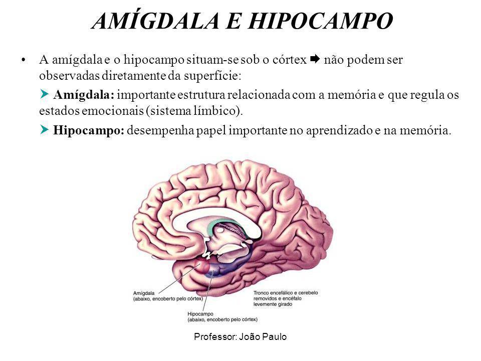 Professor: João Paulo AMÍGDALA E HIPOCAMPO A amígdala e o hipocampo situam-se sob o córtex não podem ser observadas diretamente da superfície: Amígdal