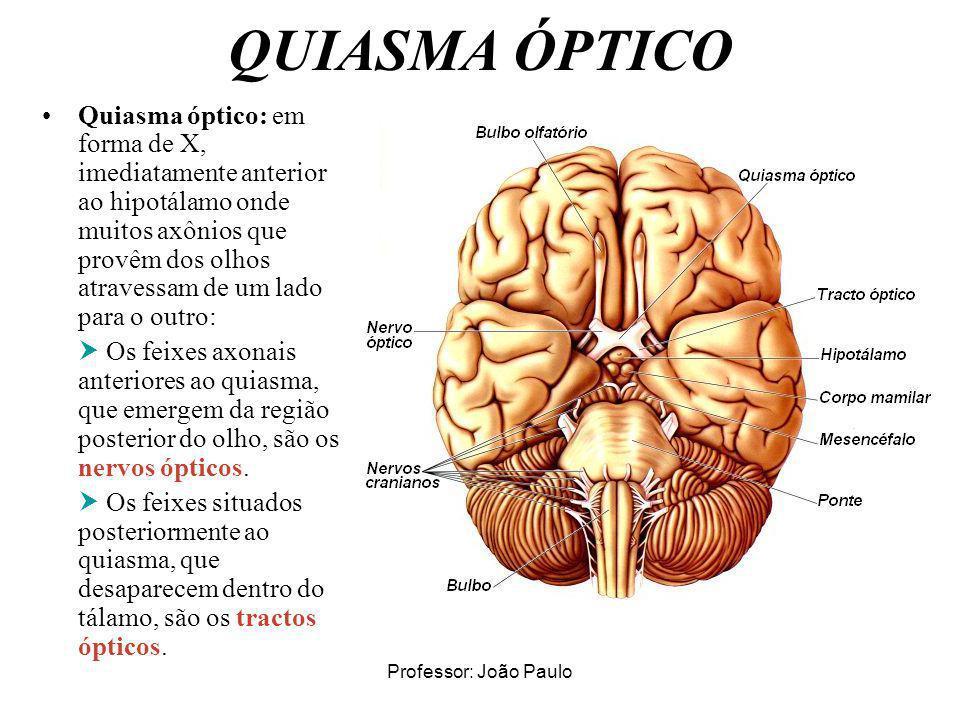 Professor: João Paulo QUIASMA ÓPTICO Quiasma óptico: em forma de X, imediatamente anterior ao hipotálamo onde muitos axônios que provêm dos olhos atra