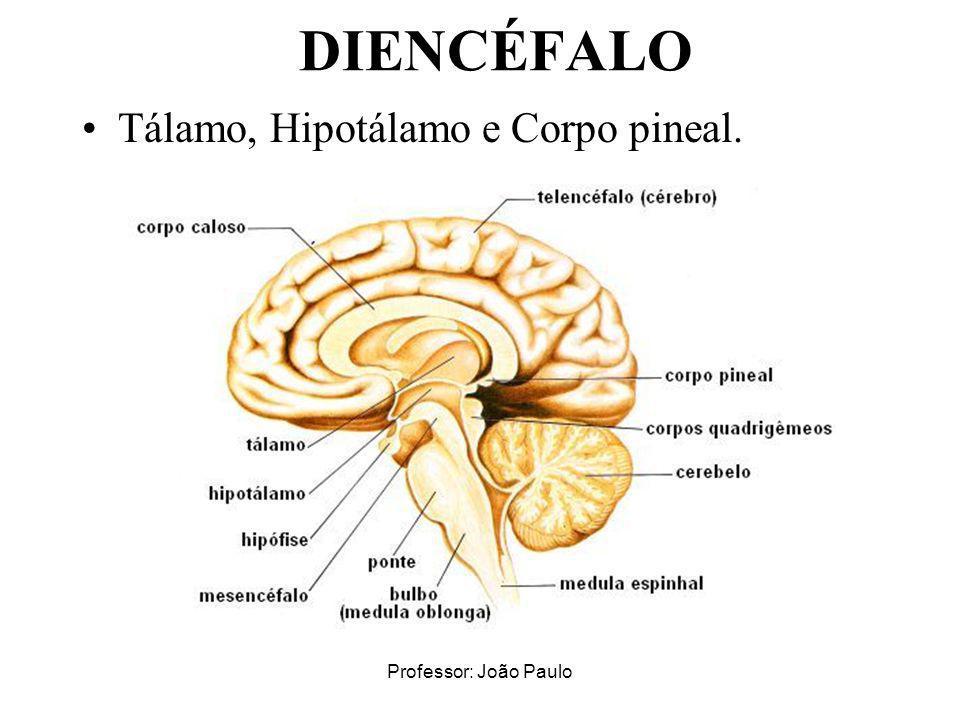 Professor: João Paulo DIENCÉFALO Tálamo, Hipotálamo e Corpo pineal.