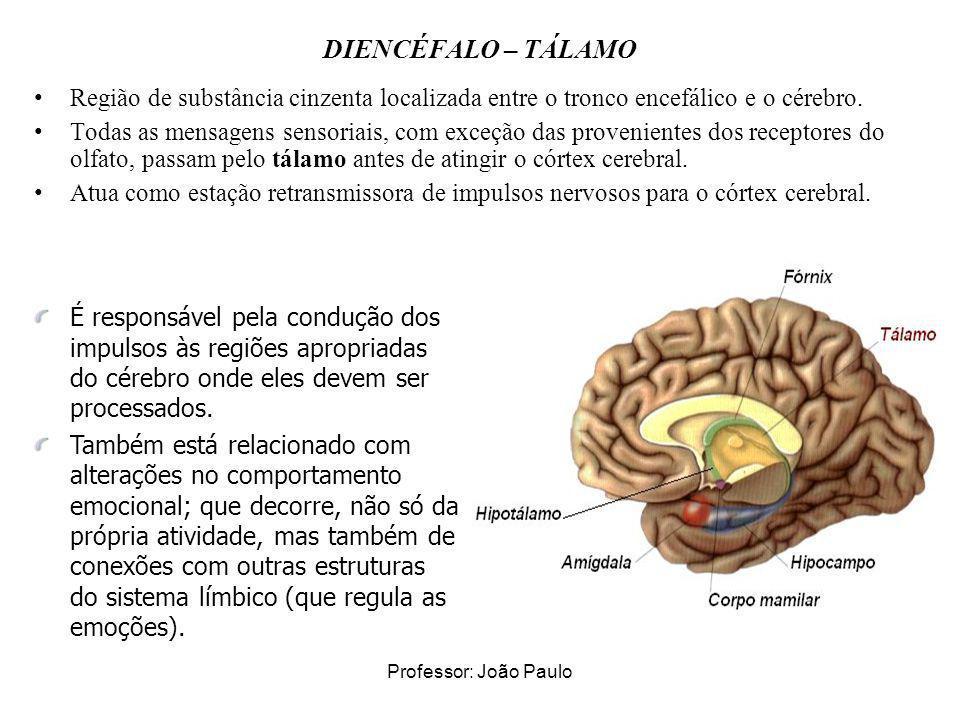 Professor: João Paulo DIENCÉFALO – TÁLAMO Região de substância cinzenta localizada entre o tronco encefálico e o cérebro. Todas as mensagens sensoriai
