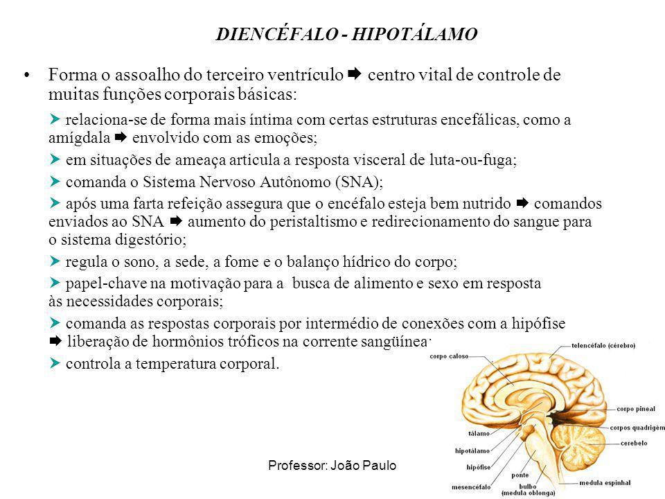Professor: João Paulo DIENCÉFALO - HIPOTÁLAMO Forma o assoalho do terceiro ventrículo centro vital de controle de muitas funções corporais básicas: re