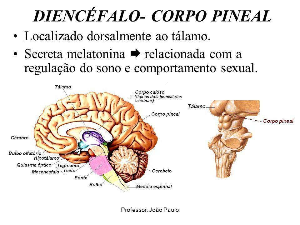 Professor: João Paulo DIENCÉFALO- CORPO PINEAL Localizado dorsalmente ao tálamo. Secreta melatonina relacionada com a regulação do sono e comportament