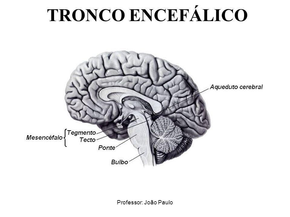 Professor: João Paulo TRONCO ENCEFÁLICO