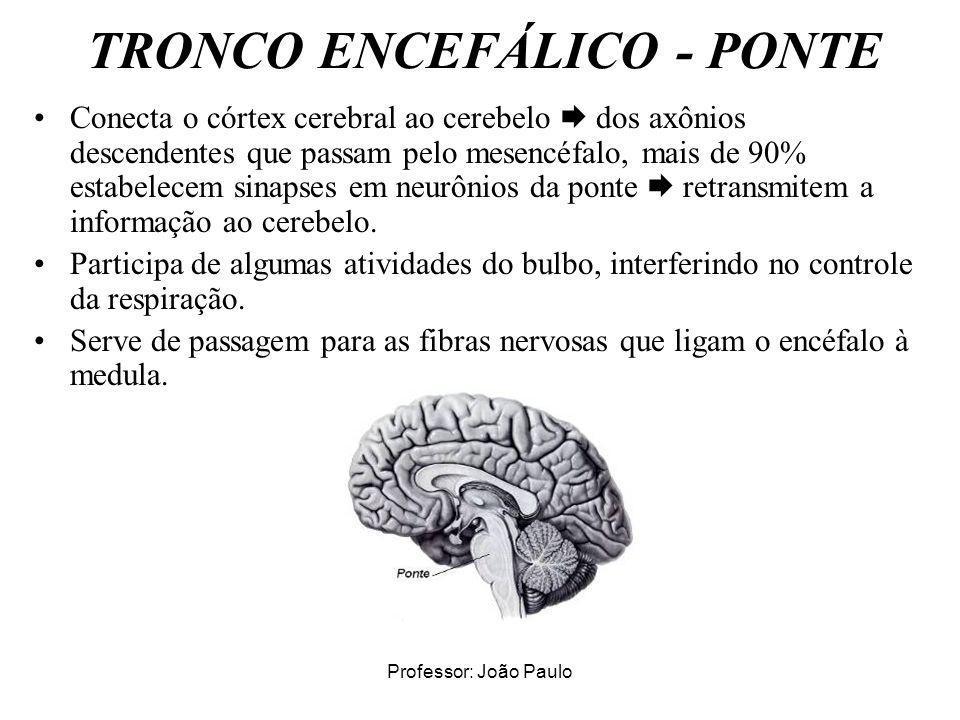 Professor: João Paulo TRONCO ENCEFÁLICO - PONTE Conecta o córtex cerebral ao cerebelo dos axônios descendentes que passam pelo mesencéfalo, mais de 90
