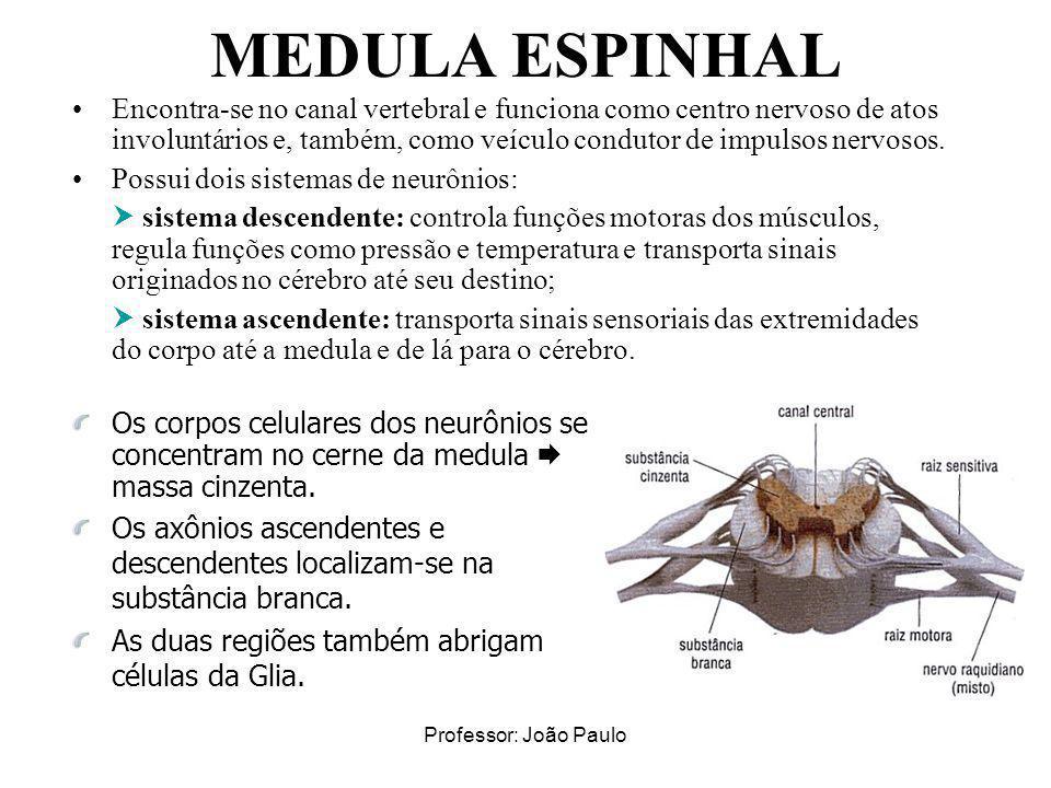 Professor: João Paulo MEDULA ESPINHAL Encontra-se no canal vertebral e funciona como centro nervoso de atos involuntários e, também, como veículo cond