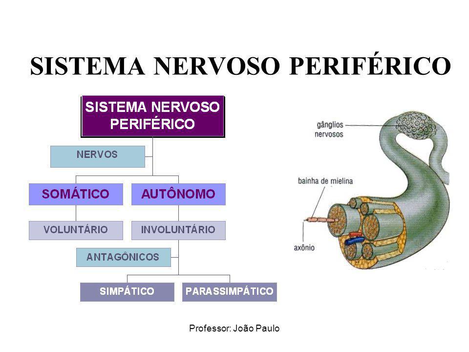 Professor: João Paulo SISTEMA NERVOSO PERIFÉRICO