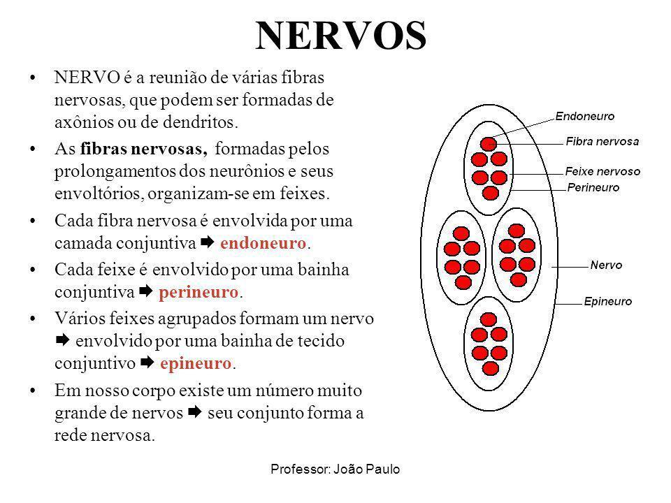 Professor: João Paulo NERVOS NERVO é a reunião de várias fibras nervosas, que podem ser formadas de axônios ou de dendritos. As fibras nervosas, forma