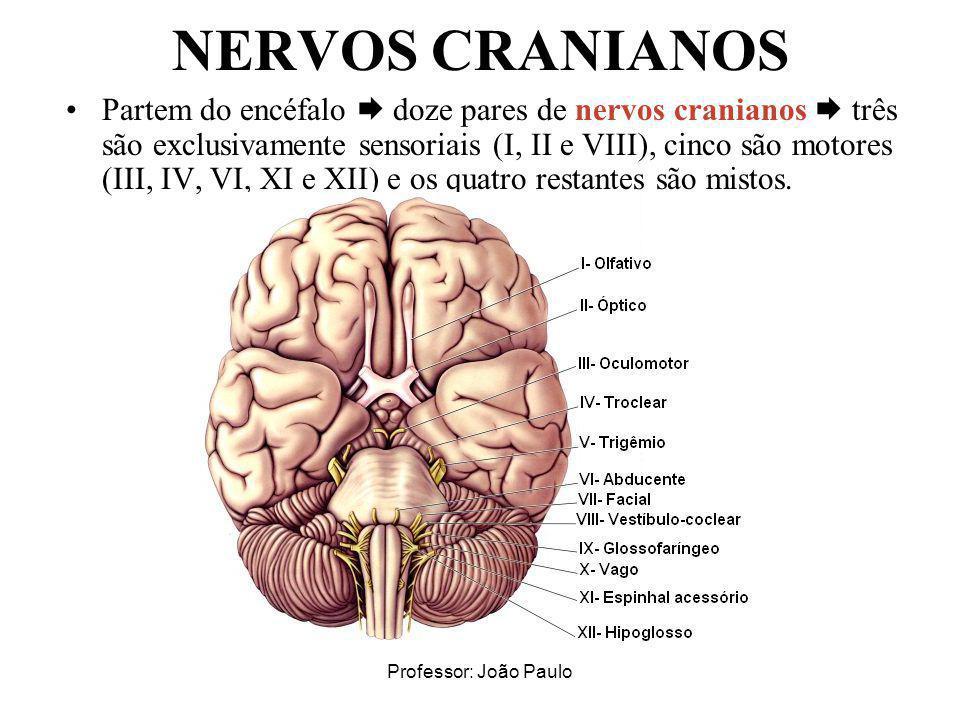 Professor: João Paulo NERVOS CRANIANOS Partem do encéfalo doze pares de nervos cranianos três são exclusivamente sensoriais (I, II e VIII), cinco são