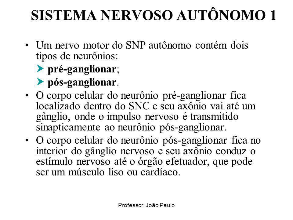 Professor: João Paulo SISTEMA NERVOSO AUTÔNOMO 1 Um nervo motor do SNP autônomo contém dois tipos de neurônios: pré-ganglionar; pós-ganglionar. O corp