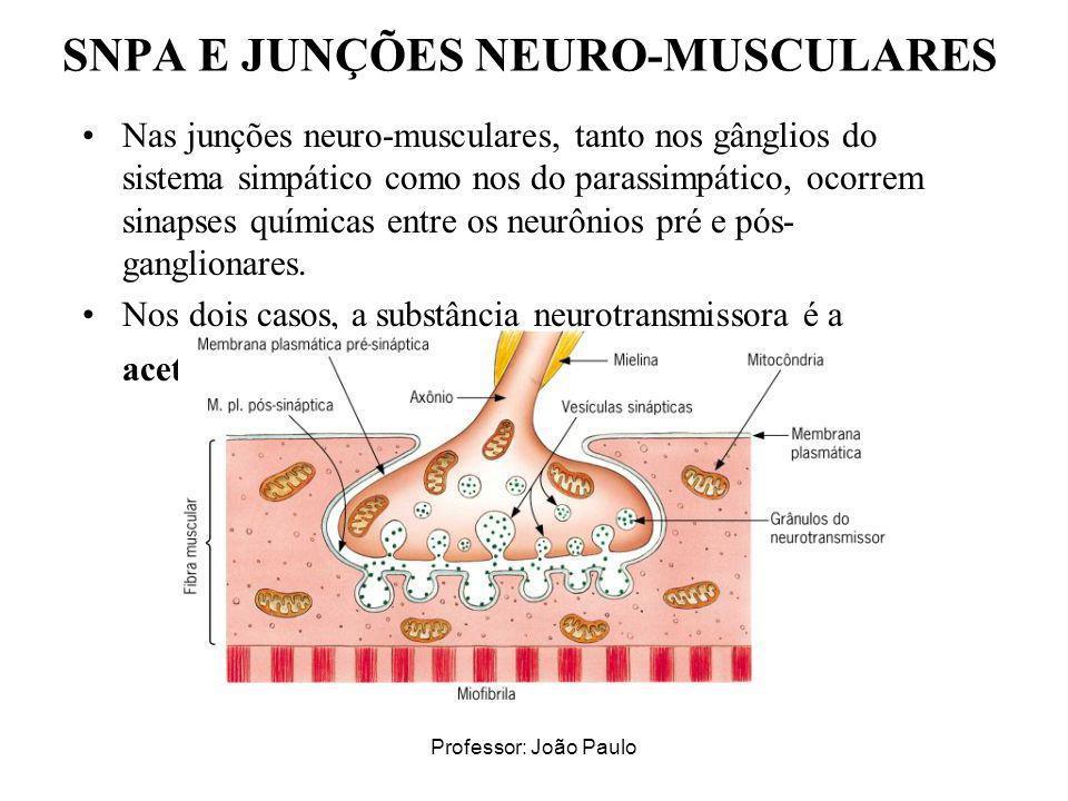 Professor: João Paulo SNPA E JUNÇÕES NEURO-MUSCULARES Nas junções neuro-musculares, tanto nos gânglios do sistema simpático como nos do parassimpático