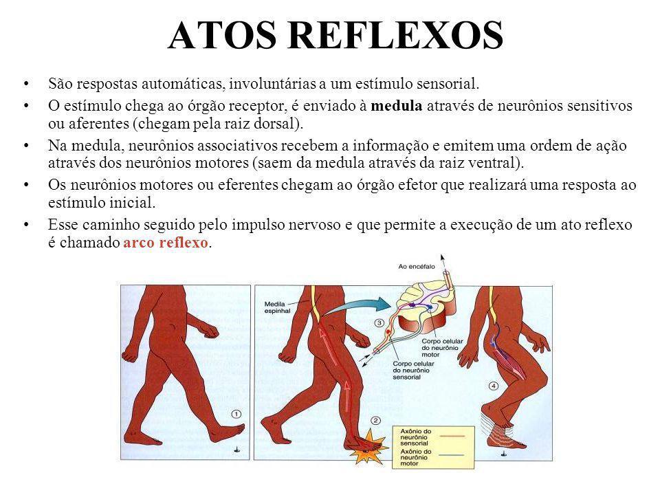 Professor: João Paulo ATOS REFLEXOS São respostas automáticas, involuntárias a um estímulo sensorial. O estímulo chega ao órgão receptor, é enviado à