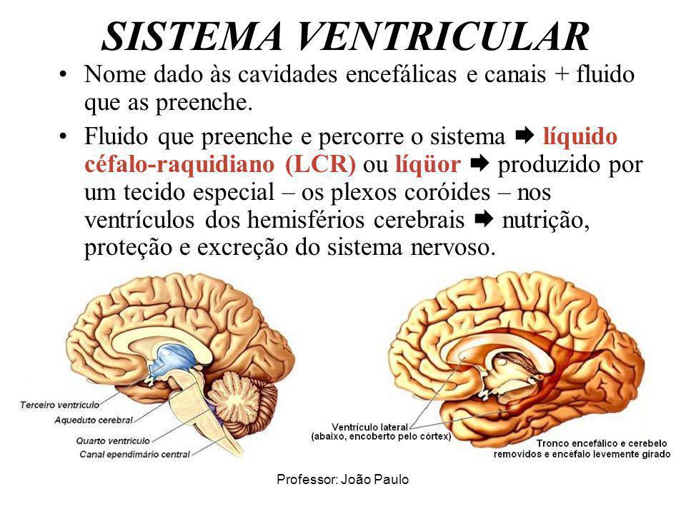 Professor: João Paulo SISTEMA VENTRICULAR Nome dado às cavidades encefálicas e canais + fluido que as preenche. Fluido que preenche e percorre o siste