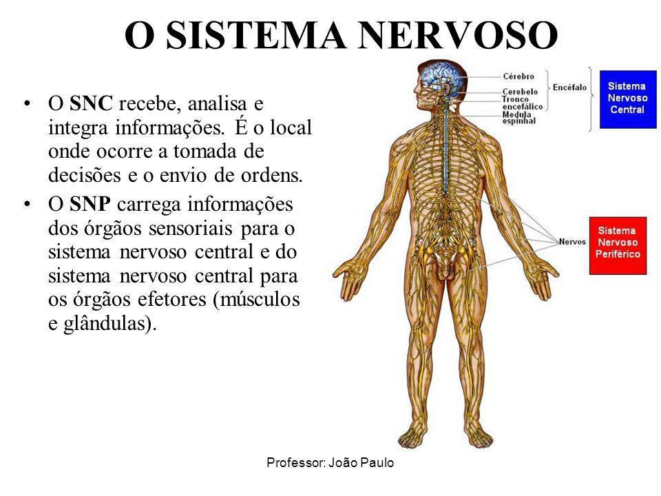 Professor: João Paulo O SISTEMA NERVOSO O SNC recebe, analisa e integra informações. É o local onde ocorre a tomada de decisões e o envio de ordens. O