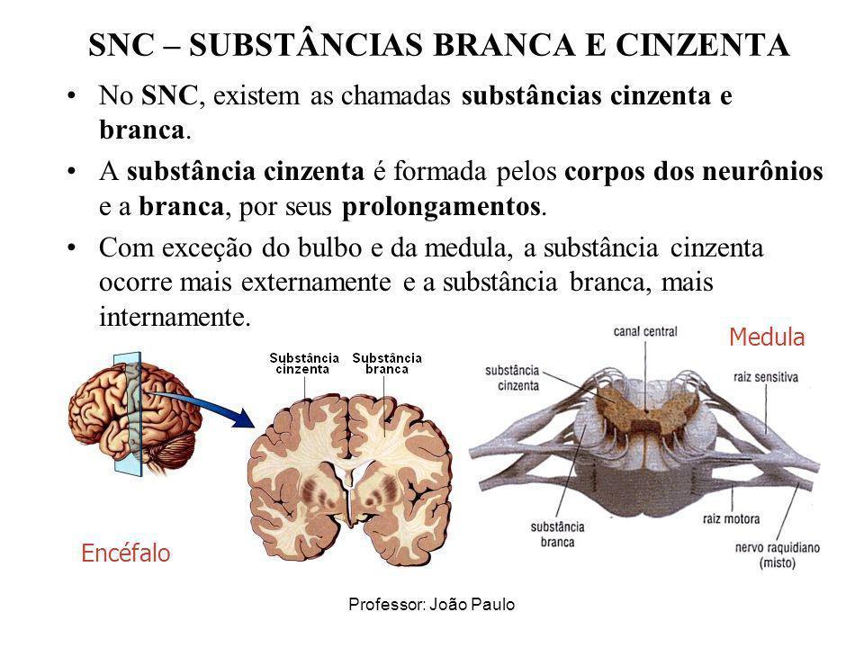 Professor: João Paulo SNC – SUBSTÂNCIAS BRANCA E CINZENTA No SNC, existem as chamadas substâncias cinzenta e branca. A substância cinzenta é formada p