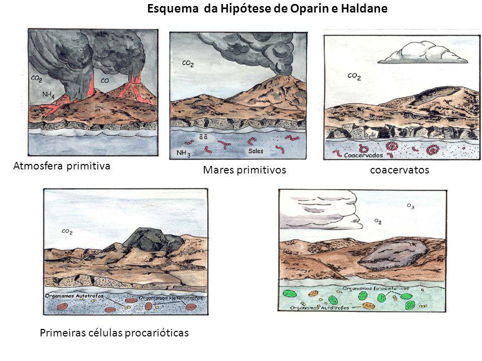 3-A hipótese de Oparin e Haldane Evolução Química Oparin, A I (1894-1980 Haldane, J.B.S (1892-1964) Os primeiros seres vivos- Moléculas orgânicas Que