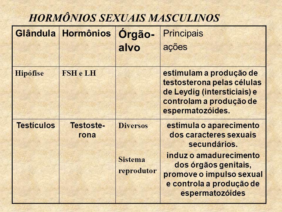 HORMÔNIOS SEXUAIS MASCULINOS GlândulaHormônios Órgão- alvo Principais ações HipófiseFSH e LH estimulam a produção de testosterona pelas células de Leydig (intersticiais) e controlam a produção de espermatozóides.