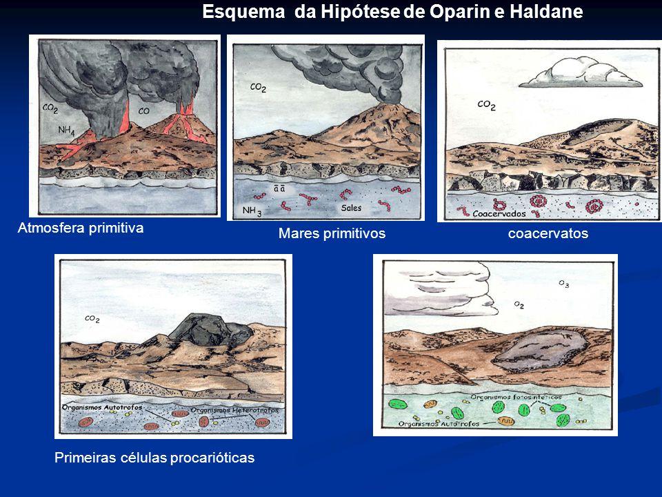 ESQUEMA DA HIPÓTESE DE OPARIN E HALDANE