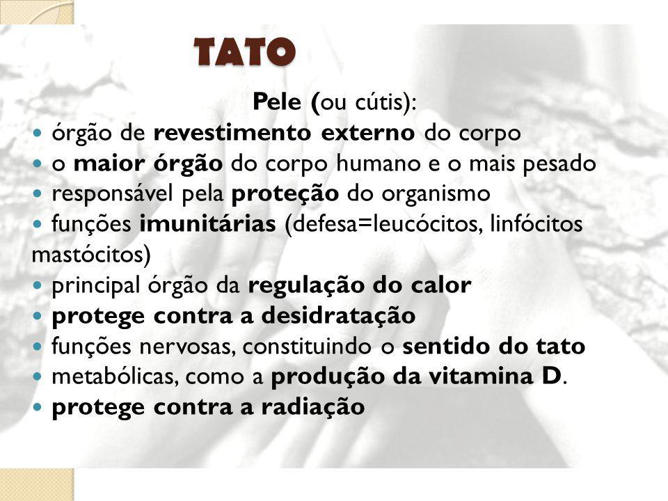 TATO Pele (ou cútis): órgão de revestimento externo do corpo o maior órgão do corpo humano e o mais pesado responsável pela proteção do organismo funç