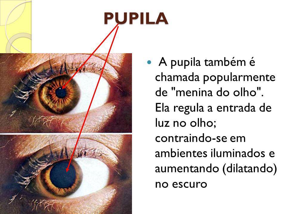 PUPILA A pupila também é chamada popularmente de
